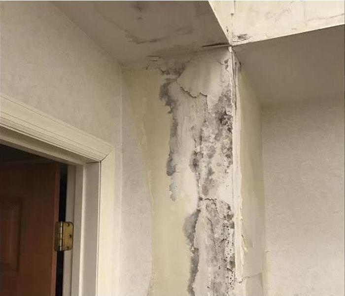 A close up of wall corner with mold under peeling wallpaper.